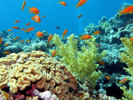 coral reef with brain and soft corals on the bottom of red sea