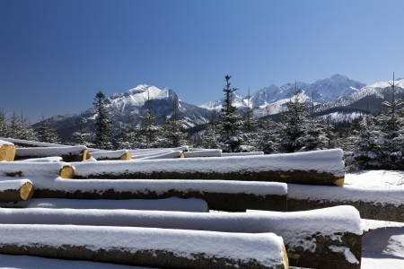 winter in tatras mountains in poland  with heap of pieces of wood photo