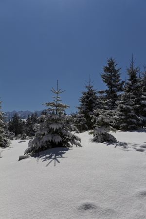 snowy winter in tatra mountains in poland with trees and blue sky Stock Photo