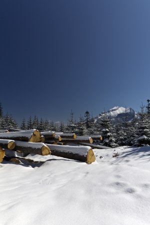 snowy winter in tatras mountains in poland  with heap of pieces of wood photo