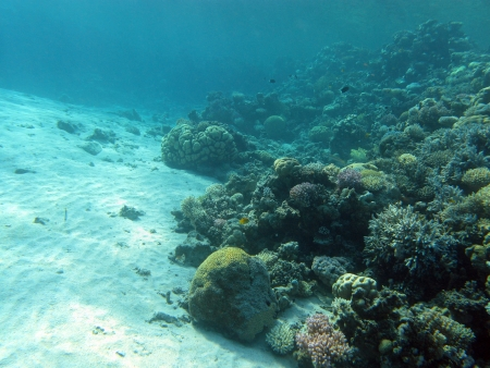 bottom of tropical sea with coral reef - underwater photo Stock Photo - 16799214