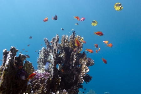 coral reef with exotic colorful fishes photo