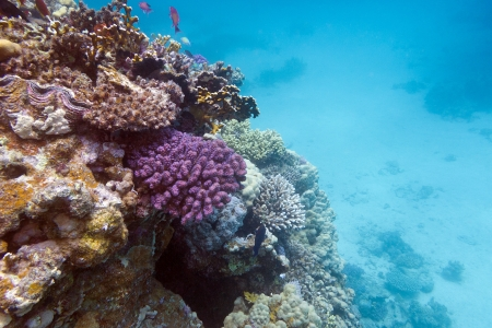 view of coral reef with hard corals at the bottom of red sea Stock Photo - 17195072