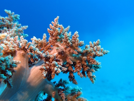 coral reef with great soft coral at the bottom of red sea Stock Photo - 17299236