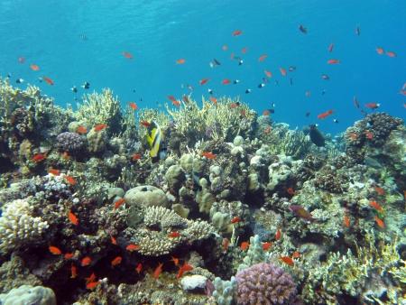 recife de coral com coral duro e fogo e peixes ex
