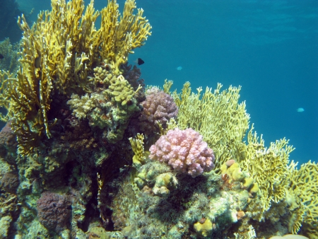 hard coral: coral reef with hard and fire coral at the bottom of tropical sea Stock Photo