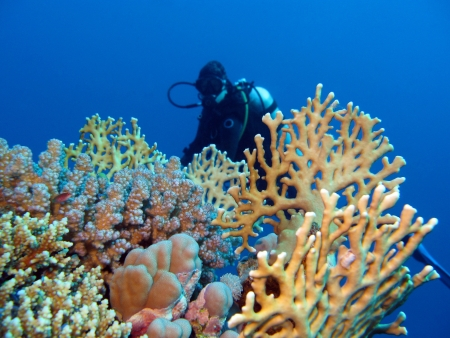 coral reef with girl diver at the bottom of tropical sea photo