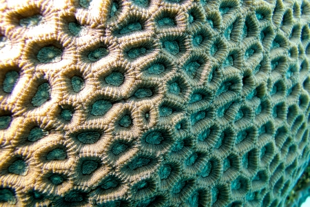 scleractinia: coral reef with brain coral - closeup Stock Photo
