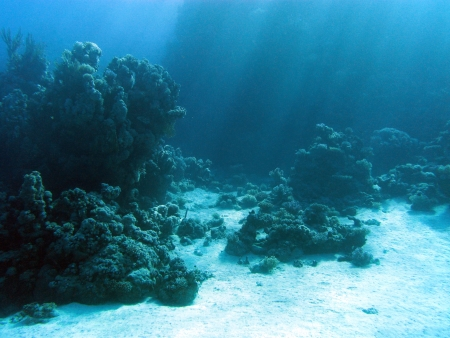 view at coral reaf with sunbeams at the bottom of tropical sea Stock Photo - 17680513