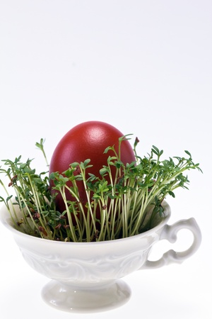 isolated cress in small cup with easter egg on white background - closeup photo