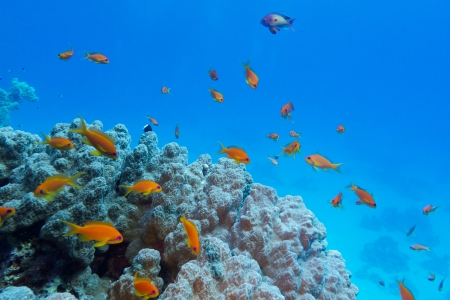 colorful coral reef with hard coral and exotic fishes at the bottom of tropical sea photo