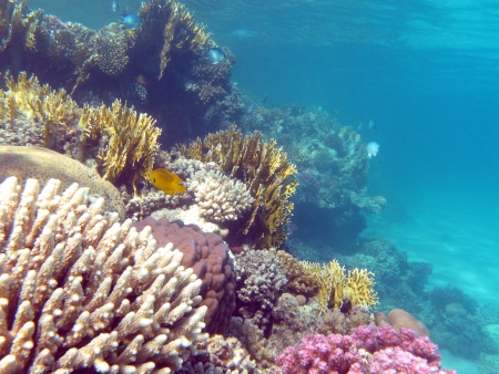 colorful coral reef with hard corals at the bottom of tropical sea photo