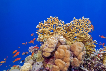coral reef with hard corals and exotic fishes at the bottom of tropical sea Stock Photo - 18277468