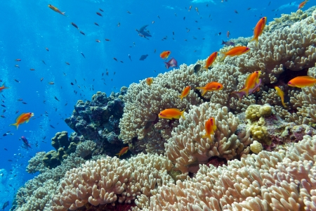 colorful coral reef with hard corals and exotic fishes at the botto of tropical sea Stock Photo - 18337131