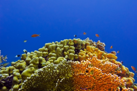 beautiful yellow hard coral at the bottom of tropical sea Stock Photo - 18337113