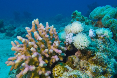 coral reef with hard and soft corals at the bottom of tropical sea Stock Photo - 18484107