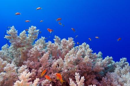 recife de coral com SOTF br