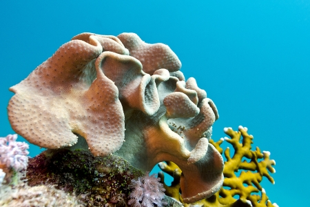 coral reef with soft coral at bottom of tropical sea photo