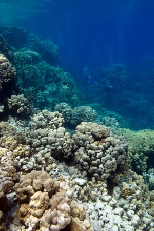 coral reef with hard corals at the bottom of tropical sea Stock Photo - 19551382