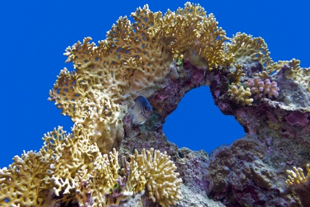 coral reef with great fire coral at the bottom of tropical sea