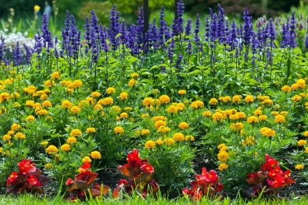 colorful blooming  flower garden Stock Photo