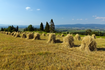 field with some bundles of hay on blue sky background photo