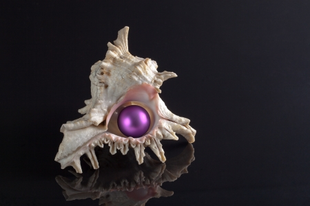 animalia:  seashell with violet christmas  bubble on black background Stock Photo