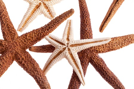some of sea stars isolated on white background photo