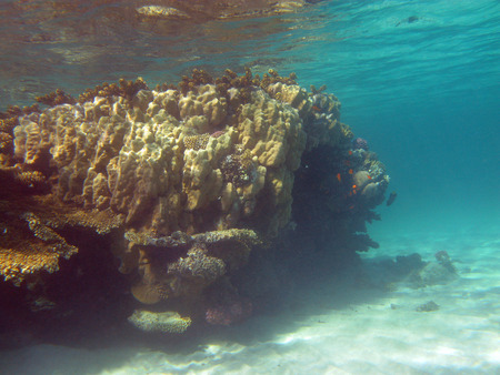 madreporaria: coral reef at the bottom of tropical sea under the water surface