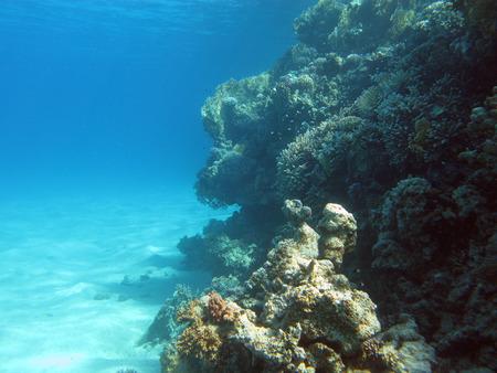 recife de corais no fundo do mar tropical no fundo da
