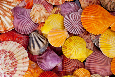 collection of various colorful seashells on black  background photo