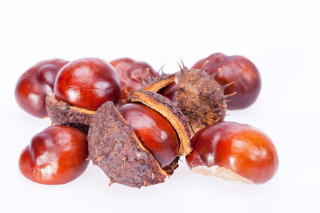 frutos de castanhas com casca seca isolado no fundo branco