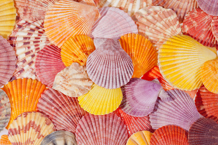 background of colorful sea shells photo