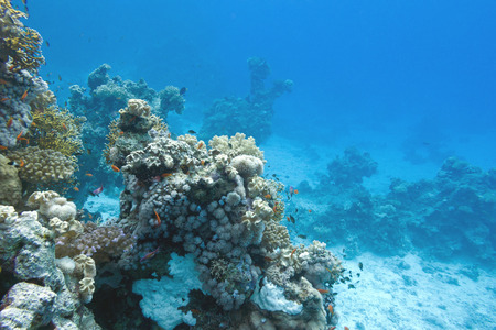 coral reef at the bottom of tropical sea, underwater photo