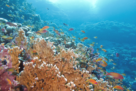 coral reef with great yellow fire coral and fishes at the bottom of tropical sea photo