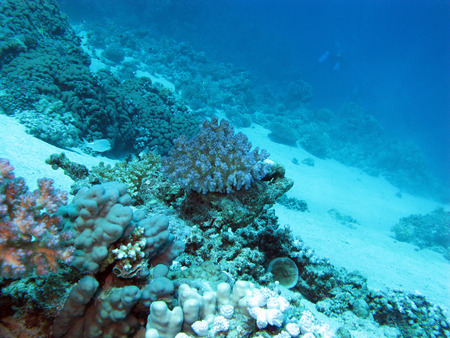 acropora: bottom of tropical sea with coral reef on great depth on blue water background Stock Photo
