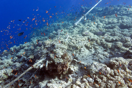 stony corals: coral reef destroyed by the mooring line
