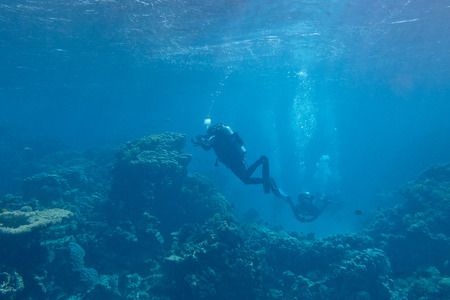 acropora: divers over a coral reef in tropical sea, underwater