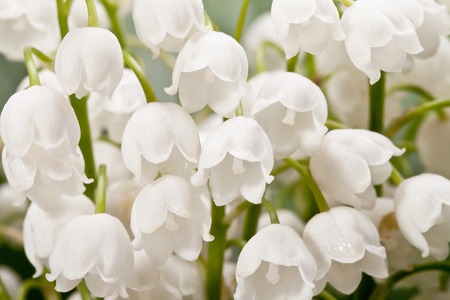 bouqet: bouqet of springtime flowers  Convallaria close up Stock Photo