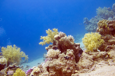 stony corals: bottom of tropical sea with colorful coral reef, underwater