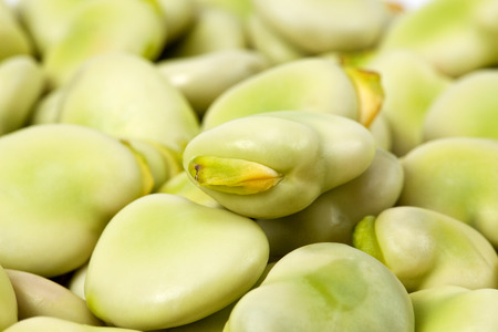 background of green broad bean close up