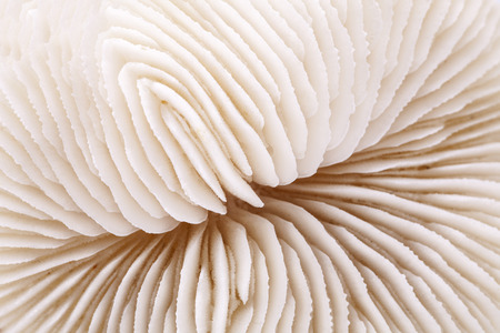 background of seashell of Fungia , close up.
