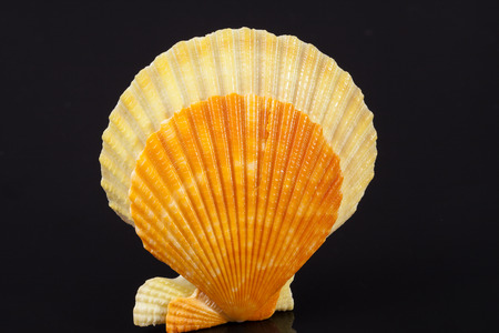 some colorful seashells of mollusk isolated on black background, close up