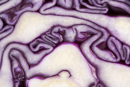 red cabbage: background of cut red cabbage, abstraction.