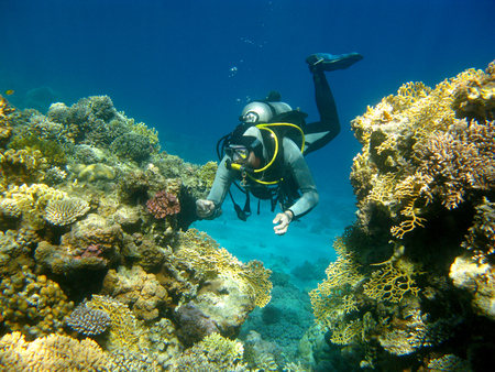 madreporaria: colorful coral reef and diver in tropical sea, underwater.