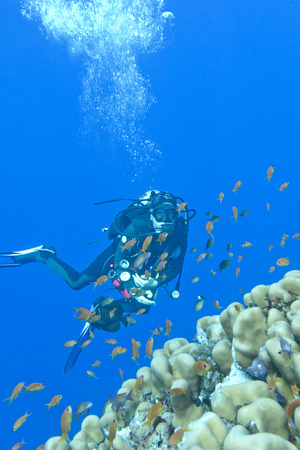 stony coral: girl diver and coral reef in tropical sea, uinderwater.