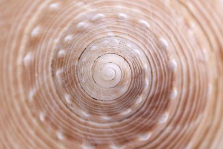CARACOL: fondo de la concha de caracol de mar, de cerca. Foto de archivo