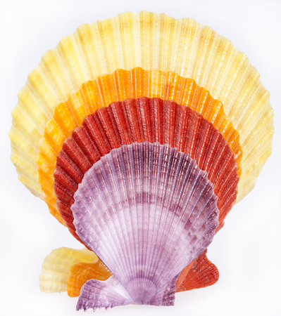 mollusk: some colorful seashells of mollusk isolated on white background. Stock Photo