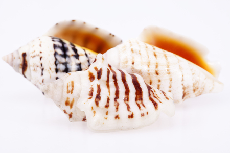 isilated: some sea shells isilated on white background, close up