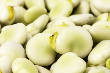 broad bean: background of fresh green broad bean, close up